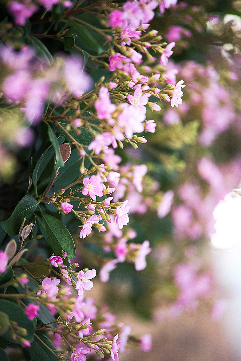 flowers200